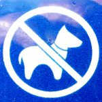 Hundepiktogramm Thylösand